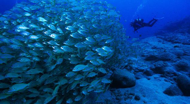 Duiken Canarische Eilanden - Fuerteventura