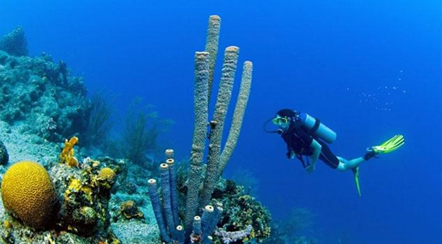 duiken-curacao