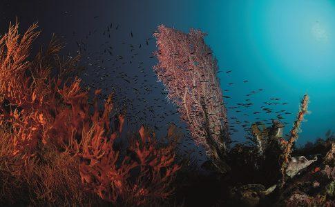 Snorkelen op Bali
