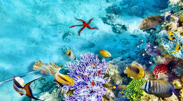 Onderwaterwereld Egypte