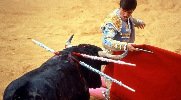Bullfight World Animal Protection