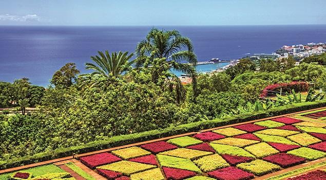 Madeira bloemen