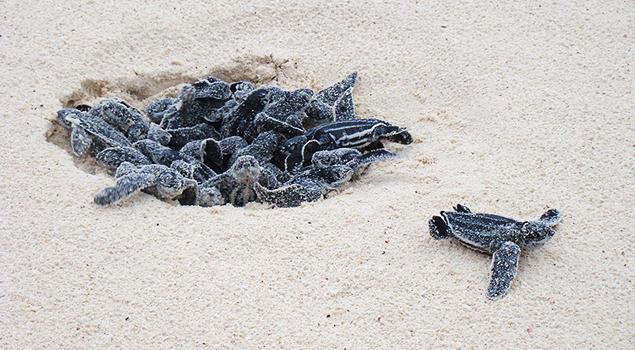 Mooiste stranden Cyprus - Turtle Beach