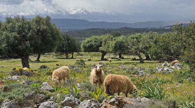Mooie vakantiebestemmingen in Europa - Kreta