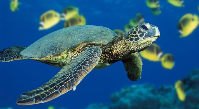 schildpad-dubai