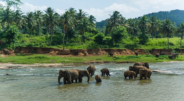 Olifanten Sri Lanka