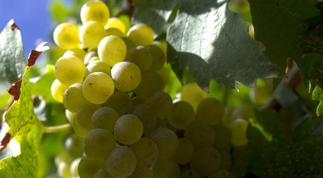 druiven met nieuwjaar