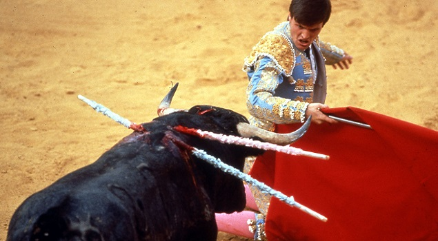 Bullfight World Animal Protection