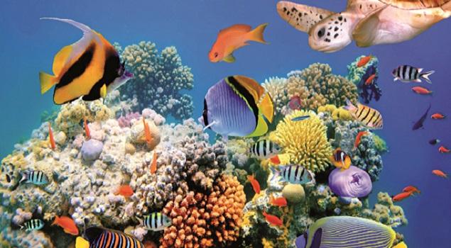 Onderwaterwereld Hurghada