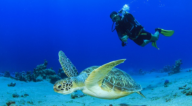 Onderwaterwereld Bonaire