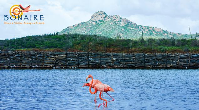 Flamingo's op Bonaire