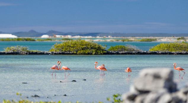 Jeroen's Bonaire
